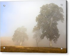 Emerging From The Fog Acrylic Print by Mike  Dawson