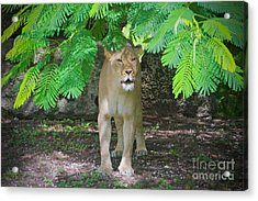 Emerging From The Shadows Acrylic Print by Judy Kay