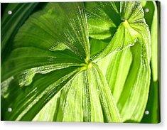 Emerging Plants Acrylic Print