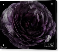 Emily's Great Ant Thingy Flower..... Acrylic Print