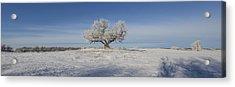 Eminija Tree With Hoarfrost Acrylic Print