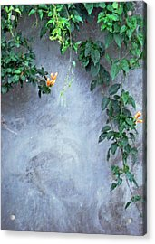 Emmas Wall Acrylic Print
