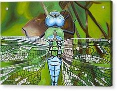 Emperor Dragonfly Acrylic Print by Bryan Ory