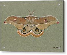 Emperor Gum Moth Acrylic Print