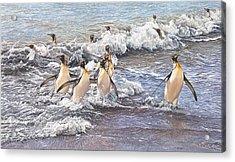 Emperor Penguins Acrylic Print