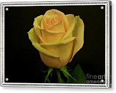 Acrylic Print featuring the photograph Empress Rose by Marsha Heiken