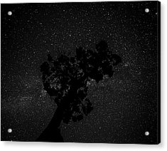 Acrylic Print featuring the photograph Empty Night Tree by T Brian Jones