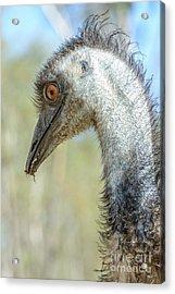Emu 3 Acrylic Print