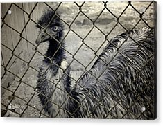 Emu At The Zoo Acrylic Print by Luke Moore