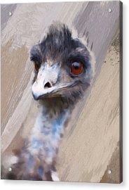 Emu Acrylic Print by Gillian Dernie