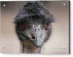 Emu Acrylic Print by Roo Printz