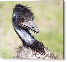 Emu Acrylic Print by Twenty Two North Photography