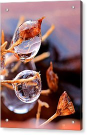 Encapsulated By Ice Acrylic Print by Christopher McKenzie