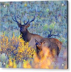 Enchanted Circle Elk Red River New Mexico Acrylic Print by Charles Frieda