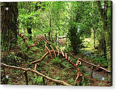 Acrylic Print featuring the photograph Enchanted Forest by Aidan Moran