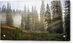 Enchanted Forest Of Kebler Pass  Acrylic Print