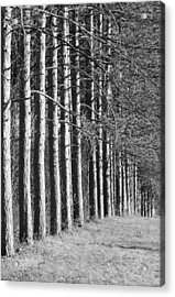 Enchanted Forest Acrylic Print by Luke Moore