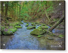 Acrylic Print featuring the digital art Enchanted Forest Three by Randy Steele