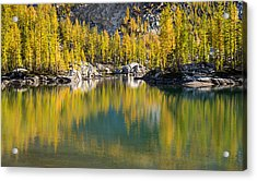 Acrylic Print featuring the photograph Enchanted Larches by Brian Bonham