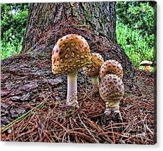 Enchanted Mushrooms Acrylic Print by Edward Sobuta