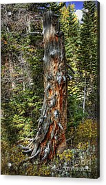 Enchanted Tree Acrylic Print by Pete Hellmann