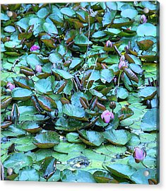 Painted Water Lilies Acrylic Print by Theresa Tahara