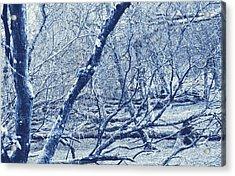 Enchanted Wood Acrylic Print by Tin Lid Photography