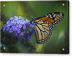 Enchanting Monarch Acrylic Print by Elsa Marie Santoro