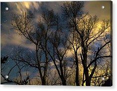 Enchanting Night Acrylic Print by James BO Insogna