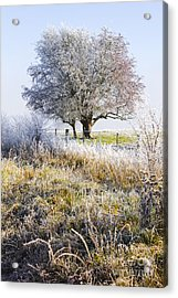 Enchanting Snow Covered Landscape Acrylic Print by Jorgo Photography - Wall Art Gallery