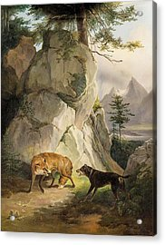 Encounter Of Fox And Dog In Rocky Landscape Acrylic Print by MotionAge Designs