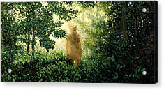 Encounter Acrylic Print by Paul Sierra