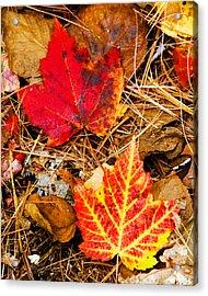 End Of Fall Acrylic Print by Bob Bailey