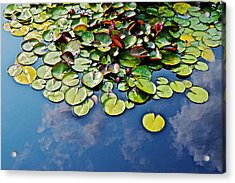 End Of July Water Lilies In The Clouds Acrylic Print by Janis Nussbaum Senungetuk