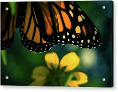 End Of Summer Monarch Acrylic Print