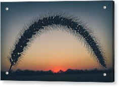 Acrylic Print featuring the photograph End Of The Day by Viviana  Nadowski