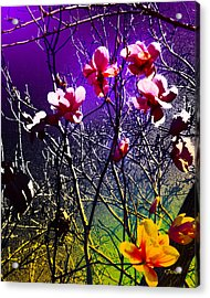 End Of Winter Acrylic Print