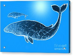 Endangered Gray Whales Acrylic Print by Nick Gustafson