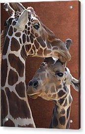 Endearing Giraffes Acrylic Print