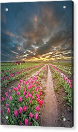 Acrylic Print featuring the photograph Endless Tulip Field by William Lee