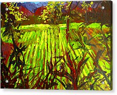 Endless Vineyards Acrylic Print by Patricia Awapara