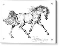Endurance Horse Acrylic Print
