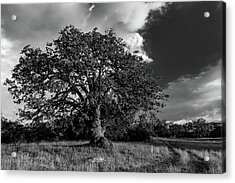 Engellman Oak Palomar Black And White Acrylic Print