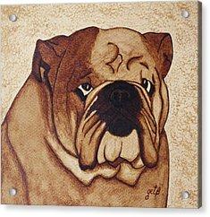 English Bulldog Coffee Painting Acrylic Print by Georgeta  Blanaru