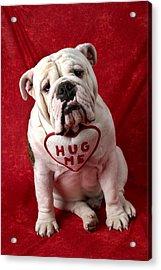 English Bulldog Acrylic Print by Garry Gay