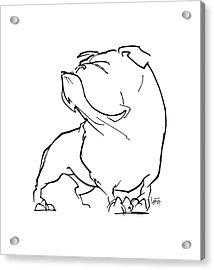 English Bulldog Gesture Sketch Acrylic Print