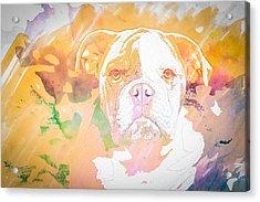 English Bulldog Wc Acrylic Print