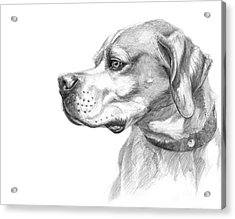 English Pointer Sketch Acrylic Print by Svetlana Ledneva-Schukina