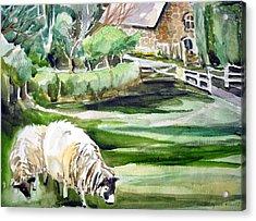 English Sheep Acrylic Print by Mindy Newman