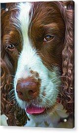 English Springer Spaniel 2 - Paint Acrylic Print by Steve Harrington